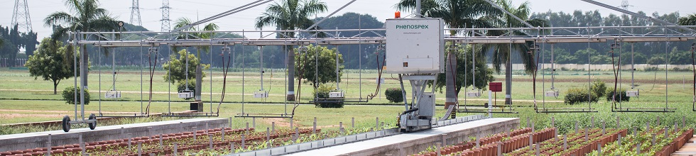 field phenotyping Fieldscan with up to 20 PlantEye scans thousands of plants per hour