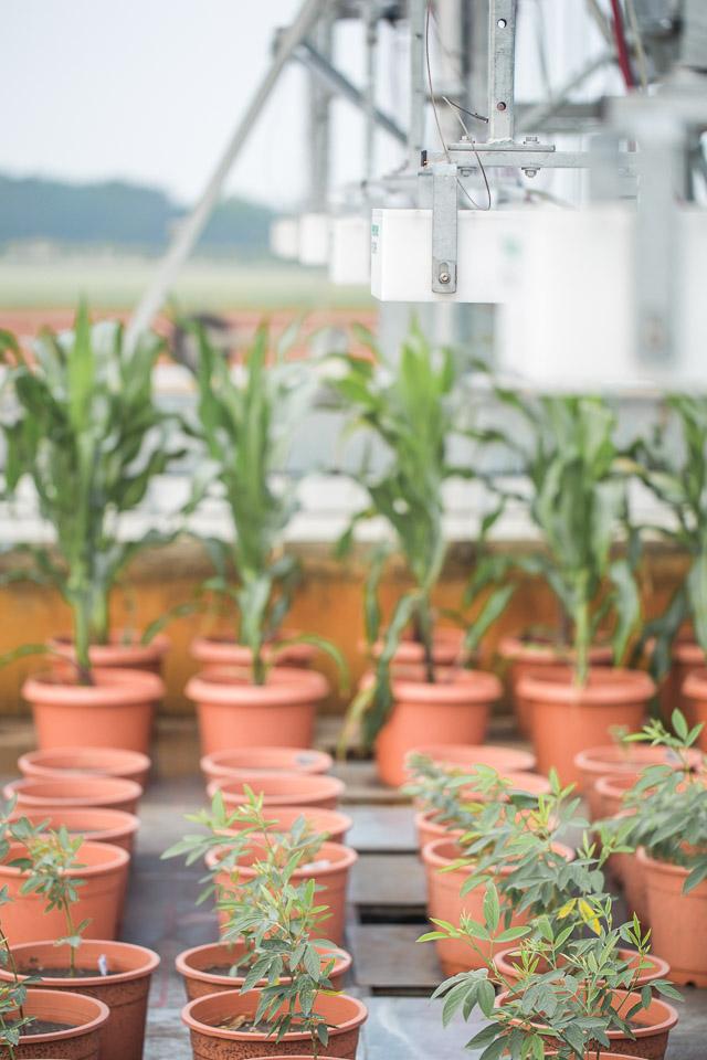 FieldScan uses mutliple PlantEyes to scan plants