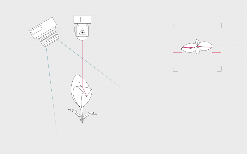 illustration of a laser light section as in PlantEye where a line is projected on the plant to measure the height of each pixel