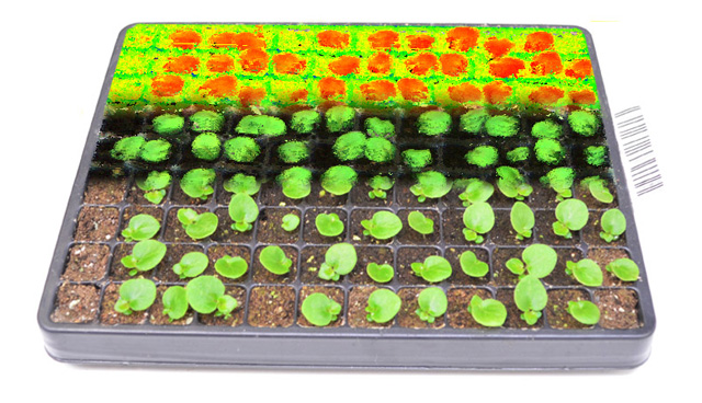 Germination tray 3d NDVI