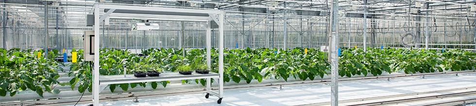 TraitFinder phenotyping digital plant measurements