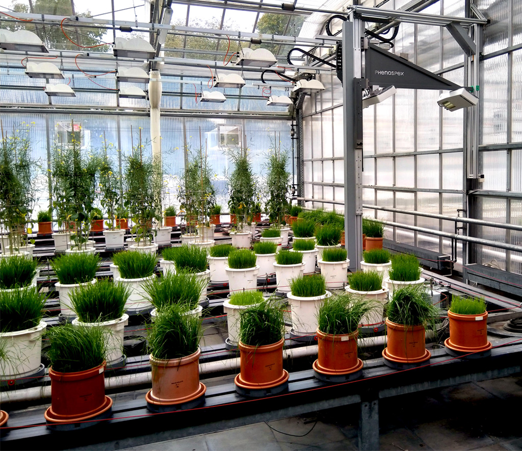3D plant phenotyping with conveyor belt