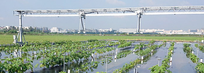 FieldScan - Field Phenotyping Flooding and heat stress experiment wvc
