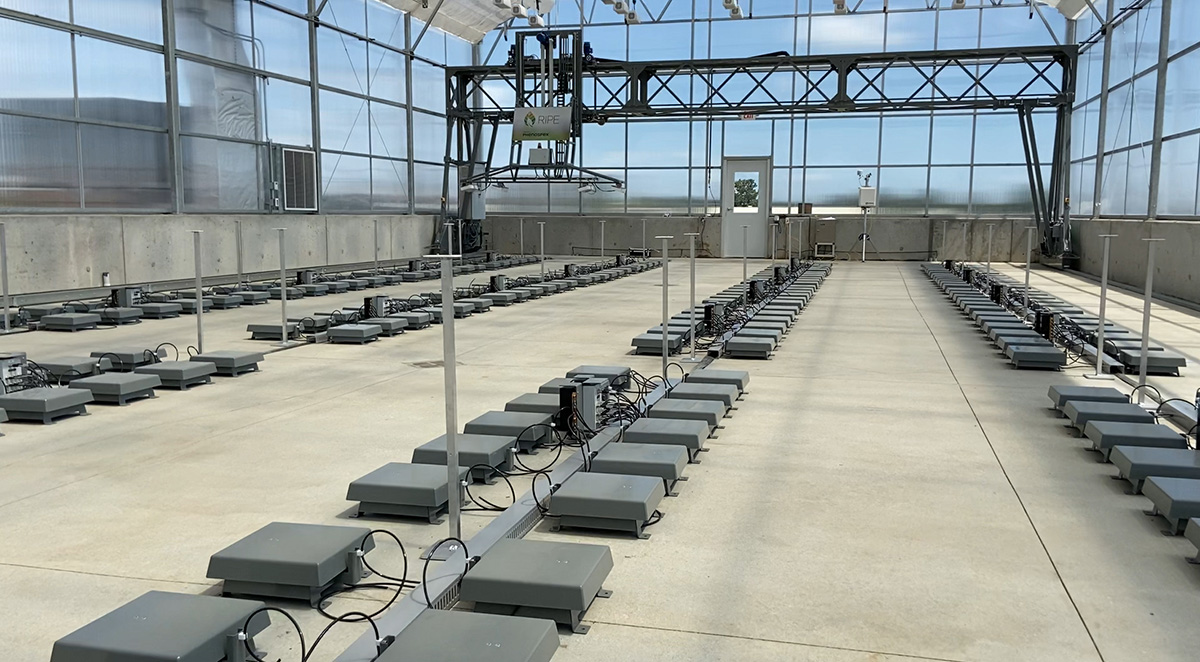 FieldScan greenhouse phenotyping automation for the RIPE project in Illinois