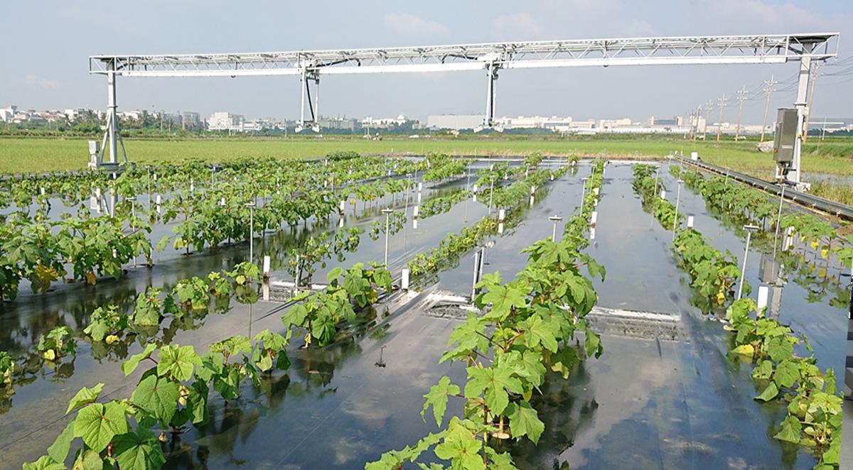FieldScan plant phenotyping in the field - Taiwan 3