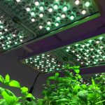 Phytofy LED panels for research