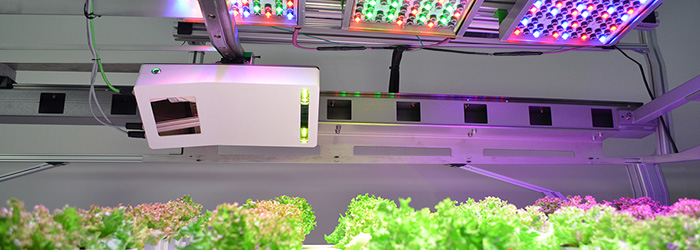 blog header osram phenospex LED light recipies crops